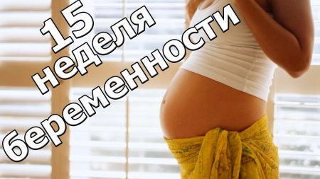 Что ожидает беременную на 15 неделе беременности