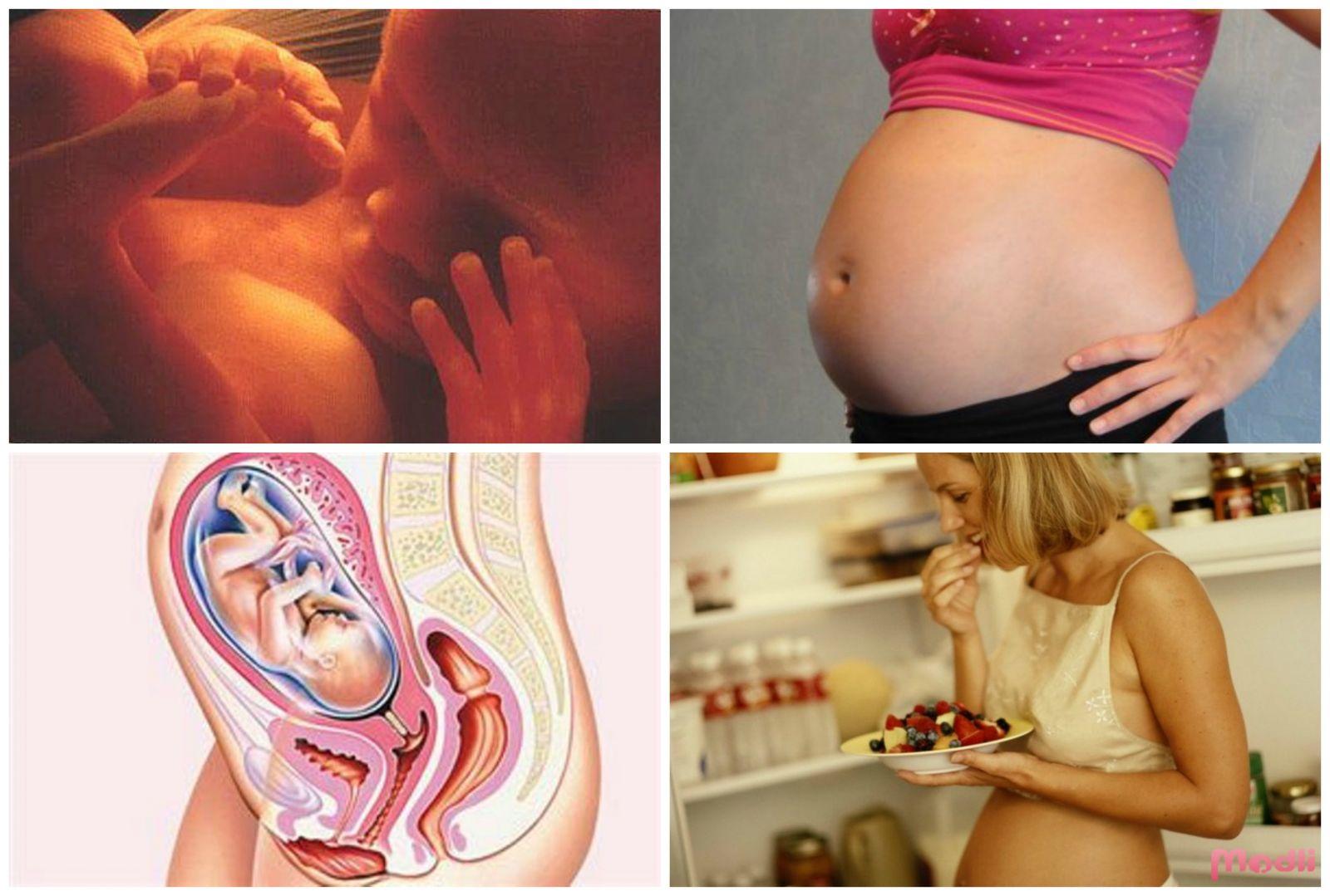 Фото внутренности беременной, Расположение органов при беременности 21 фотография